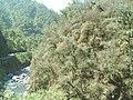 Ruta 307, Quebrada de Los Sosa, Reserva Natural Los Sosa, Tucumán, Argentina - panoramio.jpg