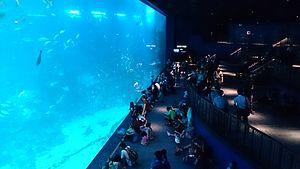 Marine Life Park - S.E.A. Aquarium