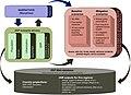 SSP narratives, socioeconomic drivers and mitigation scenarios.jpg