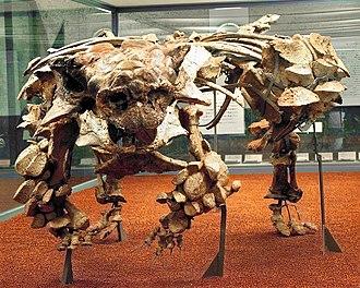 Pinacosaurus - Skeleton of specimen MPC 100/1305 with skull cast of Saichania holotype