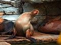 Saint Louis Zoo 043.jpg