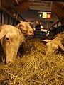 Salon international de l'agriculture 2011 (27).jpg