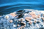 Sanc0118 - Flickr - NOAA Photo Library.jpg