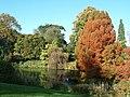 Sandringham House Gardens, Autumn plumage ^ - geograph.org.uk - 85472.jpg