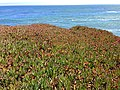 Santa Cruz Natural Bridges plants and water.JPG