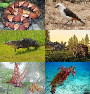 Sauria Clade of reptiles