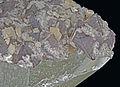 Scheelite, dolomite sur quartz et chlorite (Chine) 1.jpg
