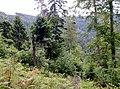 Schwarzwald bei Reichental - panoramio.jpg