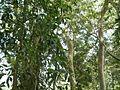 Scrubland - panoramio.jpg