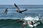 Sea Life - Santa Monica Beach (14242872673).jpg