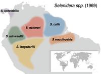 Selenidera