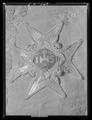 Serafimerordens kraschan sittande på Adolf Fredriks kröningsrock - Livrustkammaren - 36898.tif