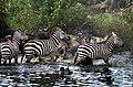 Serengeti migration JF3.jpg