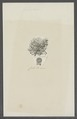 Serpula glareoides - - Print - Iconographia Zoologica - Special Collections University of Amsterdam - UBAINV0274 102 20 0027.tif