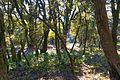 Shaded trail (16213033955).jpg