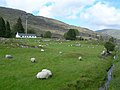 Sheep Farming - geograph.org.uk - 456492.jpg