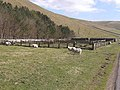 Sheep pens in Upper Coquetdale - geograph.org.uk - 1264128.jpg