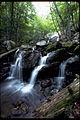 Shenandoah National Park SHEN2803.jpg