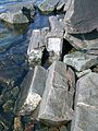 Shoreline rocks near Jones Landing 3.JPG