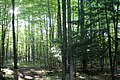 Sibbald Point Provincial Park IMG 3093 (15382282841).jpg