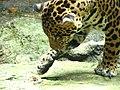 Singapore zoo (72296678).jpg