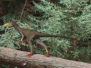 Sinocalliopteryx, Lebendrekonstruktion