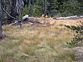 Small meadow - Tahoe View - descending from Lake ALoha (3090853826).jpg