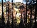 Sommerlicher Herbst Herrenstuhl - panoramio (22).jpg