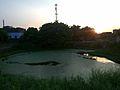 Sonauli Pond.jpg