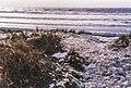 Sonoma Coast Storm Foam 1994 (35321967822).jpg