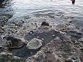 Sorgeto Ischia - panoramio.jpg
