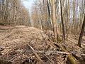 Sovetskiy rayon, Bryansk, Bryanskaya oblast', Russia - panoramio (432).jpg