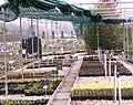 Sprinkler irrigation2.jpg