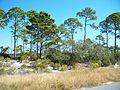 St Joseph Peninsula FL SP03.jpg