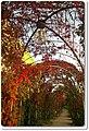 Stadtpark - panoramio (9).jpg