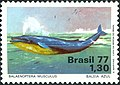 Stamp of Brazil - 1977 - Colnect 178654 - Blue Whale Balaenoptera musculus.jpeg