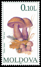Stamp of Moldova 372 - 2.png