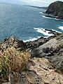 Starr-050404-5389-Digitaria insularis-habitat-Mokeehia-Maui (24623851972).jpg
