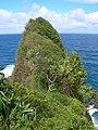 Starr-050405-5876-Schinus terebinthifolius-habitat-Keopuka-Maui (24447449960).jpg
