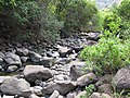 Starr-090720-3172-Psidium guajava-habitat view stream-Iao Stream-Maui (24944051056).jpg