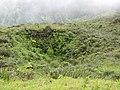 Starr-110722-7490-Polyscias oahuensis-habit and sink hole-Waihee Ridge Trail-Maui (24982968902).jpg