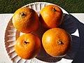 Starr-131204-2661-Citrus reticulata-Clementine fruit-Hawea Pl Olinda-Maui (25228260105).jpg