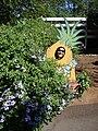 Starr 080219-3015 Ananas comosus.jpg