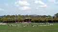 Steinkreis im Freiburger Mundenhof mit Lamas und dem Japan-Pavillon im Hintergrund.jpg