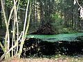 Stepanavos miškas - panoramio (1).jpg