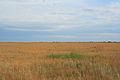 Steppe in Blagoveshensky District 08.JPG