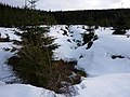 Stream and old snow - geograph.org.uk - 1708700.jpg