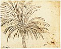 Study of a Palm Tree (recto); Mountain Landscape (verso) MET Fig98.jpg