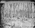 Swamps near the Appomattox River, Va - NARA - 524799.tif