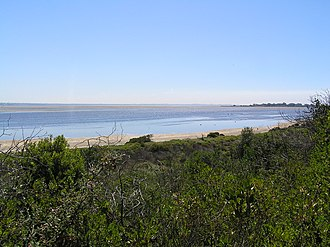 Swan Bay - Swan Bay at low tide, looking north from Queenscliff